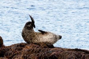 seal colony 2