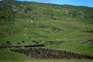 turf-cuttings